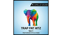 APOLLO SOUND TRAP FAT HITZ VOL.1 - BRASS HITS & STABS の通販